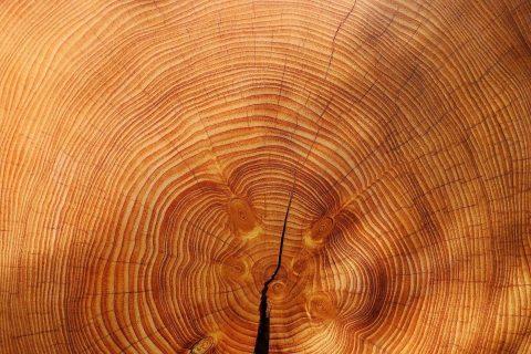 passion du bois